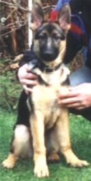 Chelsea as a puppy